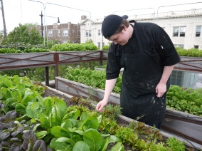 Uncommon Ground chef Patch Adams evaluates his restaurant's rooftop crops