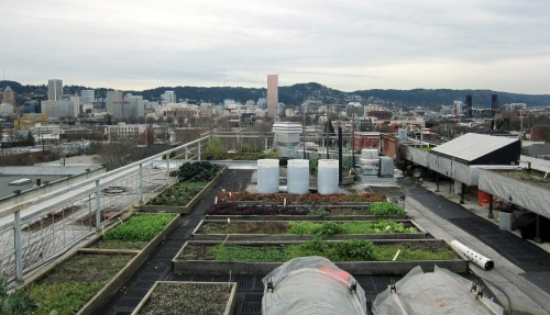 Noble Rot's rooftop farm in winter ||  photo by Jake Stein Greenberg